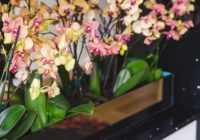 Orhideju niķi – kā ar tiem tikt galā?
