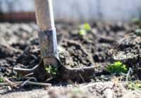 Dārza darbi pavasara sākumā – īstais laiks pievērsties sēšanai un stādīšanai