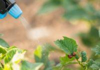 Kā apkarot dārzā esošos kaitēkļus? Un kādēļ šogad tas sagādā lielākas galvassāpes?