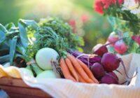 Pieci vērtīgākie pavasara dārzeņi – kuri tie ir?
