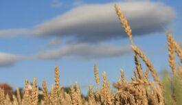 Kā lauksaimniekiem rīkoties, ja krusa, negaiss vai lietusgāzes izpostījušas laukus