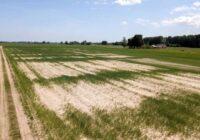 Zemniekiem būs plašāk pieejama apdrošināšana pret sausumu
