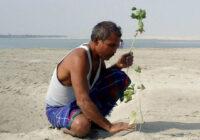Vīrietis kopš 1979. gada tuksnesī stāda kokus. Kā viss izskatās tagad? Foto