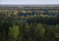 Katram saimniekam sava mežu apsaimniekošanas filozofija
