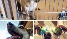 Nekad nepārstājiet adoptēt! Kā izskatās dzīvnieki pirms un pēc adopcijas