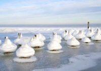 Pirms dažām dienām Kolkas pludmalē viņa pamanīja ļoti dīvainus radījumus… Kas tie ir?
