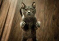 Vai tu zini, cik vecs būtu tavs kaķis, ja viņa vecumu izskaitļotu cilvēka gados?